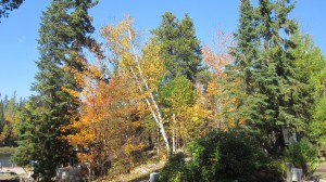 Gunflint Trail Fall