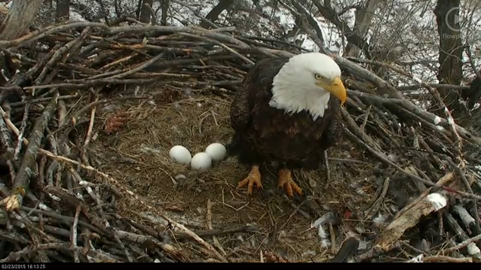 Eagle Cam photo