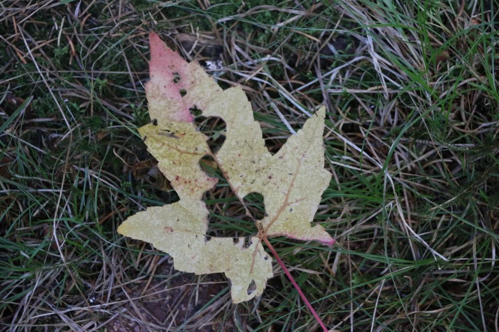 Gunflint Trail Fall