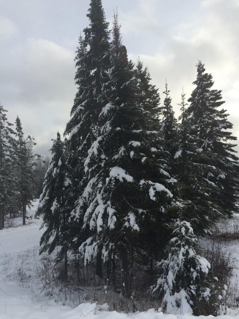 snowMG_1508