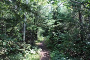 Hiking in Minnesota