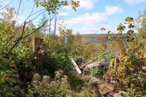 BWCAW hiking trail
