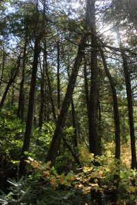 hiking the Gunflint Trail