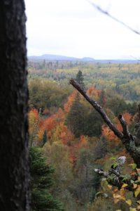 Fall color near Grand MArais, MN