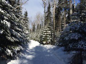 Gunflint Pines Snowshoe