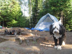 BWCA missing dog found